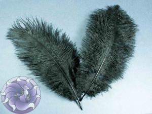 Перо страуса цвет Черный 15-19мм